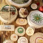 le Fedou fromages au lait cru de brebis. Lozere.